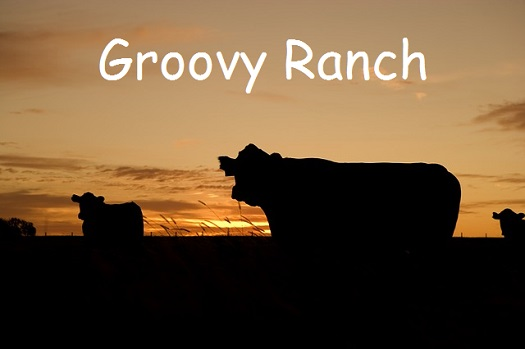 a caption of Groovy Ranch superimposed over the silhouette of cows in a pasture as dusk